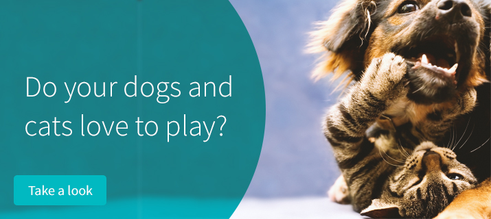 Do your cats and dogs love to play?