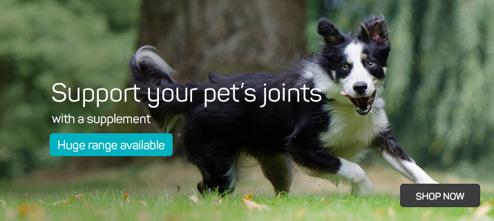 Support your pets joints