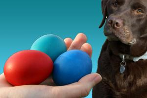Threats to pets at Easter