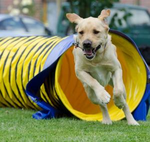 Fun games to keep your dog fit