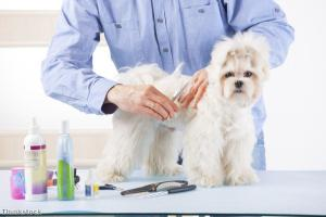 Top tips for pampered pooches, part one