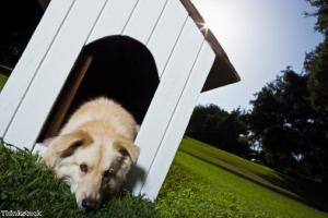 Kennel cough and boarding your dog