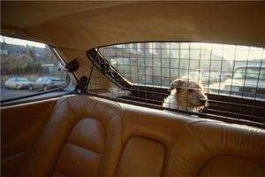 Driving safely with your dogs