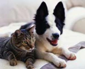 How to make your dog and cat get along