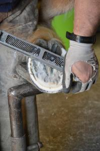 Farriers Week and the Importance of Good Hoof Care