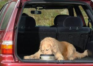 Making sure your dog is safe in the car