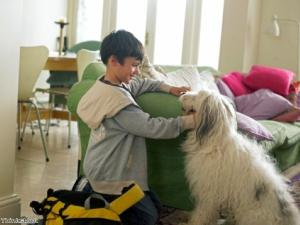Dogs improve moods of teenagers in drug and alcohol treatment