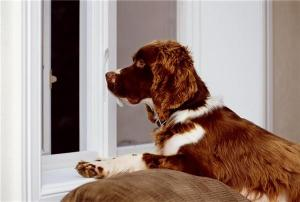 Fighting fleas and protecting your pooch