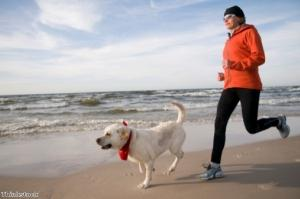 Could your canine companion be your ideal fitness partner?