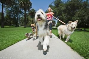 Keep your dog under control when out on walks
