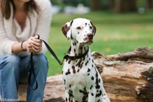 Owners should have their dog under control 'at all times'
