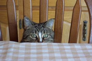 What is the best diet for my cat?