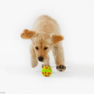 Training your puppy not to chew