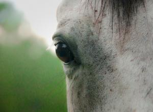 Equine eye health