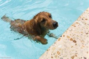 Swimming is an 'excellent means of exercising your dog'