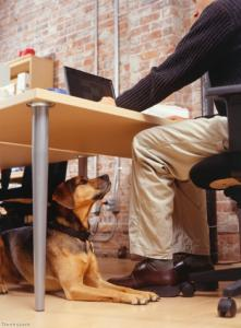 Could taking your dog to work boost your wellbeing?