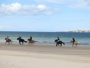 Top tips for taking your horse on holiday