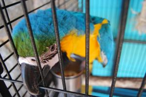 Behavioural problems in caged birds