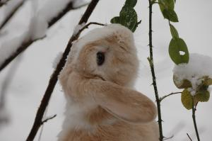 Winter-proofing for small animals