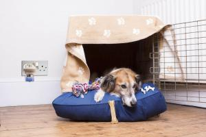Building a den for your pet during fireworks