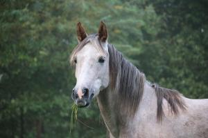 Does my horse really need a supplement?