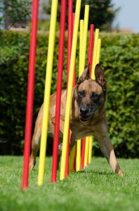The benefits of dog agility