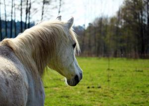 Managing a horse with long-term illness