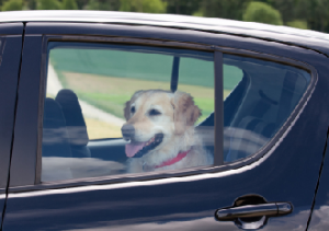 Do the cool thing! Keep dogs out of hot cars!