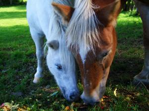 Dental health in horses
