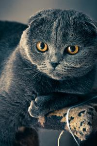 The world's most famous cats