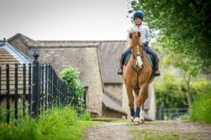 Road safety for horse riders