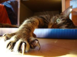 Caring for your cat's claws