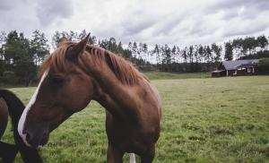 Liver disease in horses