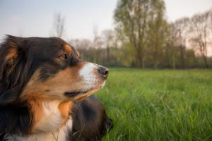 Stomach upsets in dogs