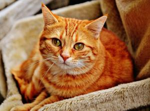 Stomach problems in cats