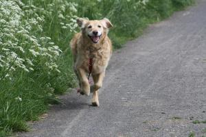Managing a dog with a chronic illness