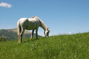 Tips for exercising your horse in warm weather