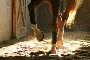 Choosing the right hoof supplement