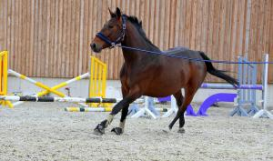 Tips on training your horse