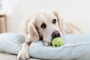 Helping your pet recover after surgery