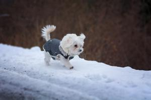 A buyer's guide to dog coats