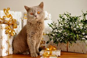 Christmas Gift Guide for Cats