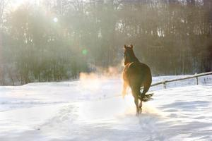 Christmas Gift Guide for Horses & Riders
