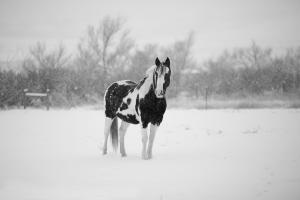 10 thing horse owners love about winter
