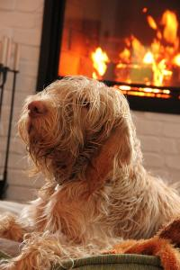 5 things pet owners love about winter