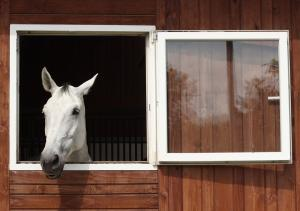 Is your horse underweight?