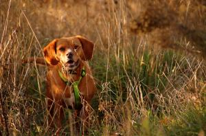 Alabama Rot: What you need to know