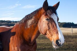 Top 5 horse blogs of 2014