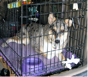 A Guide to Crate-Training your Dog