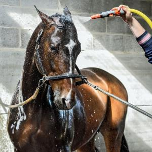 Bathing your horse
